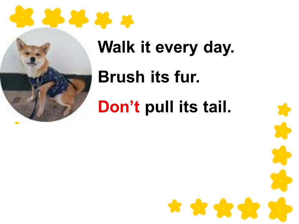 Walk it every day. Brush its fur. Dont pull its tail.