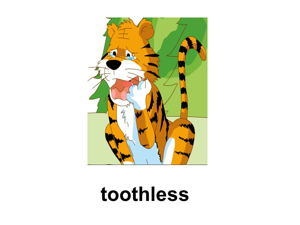 pull out the tooth pull out all the tigers teeth /p l/