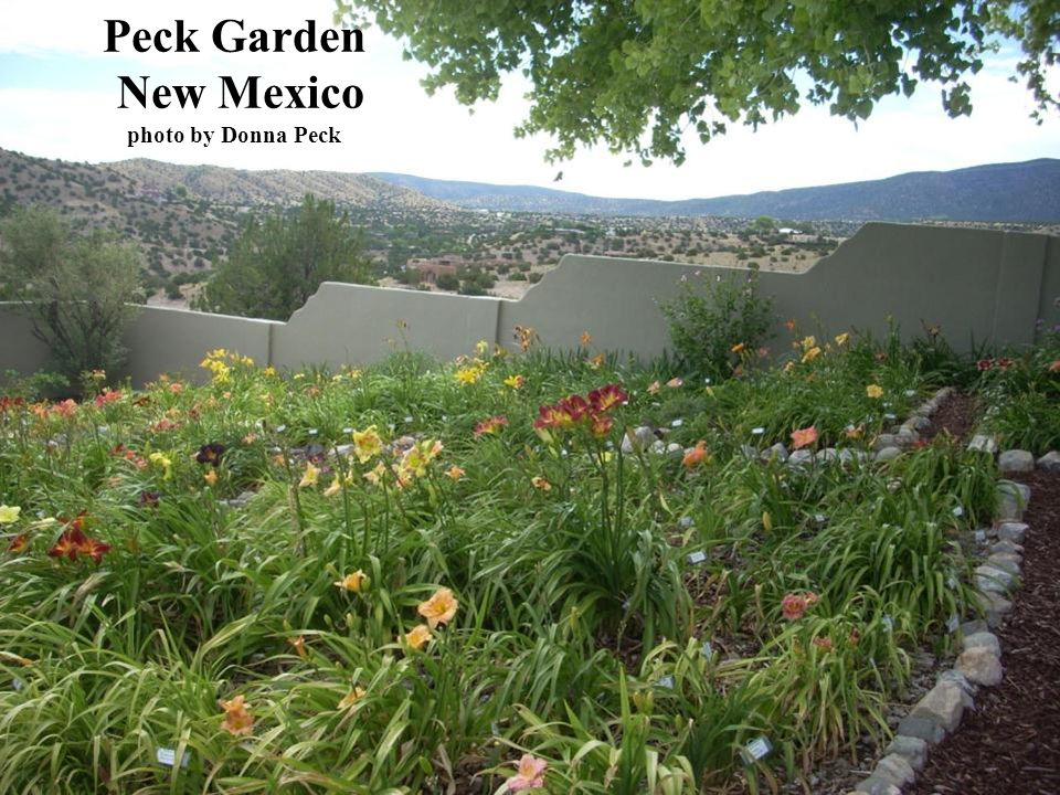 Peck Garden New Mexico photo by Donna Peck