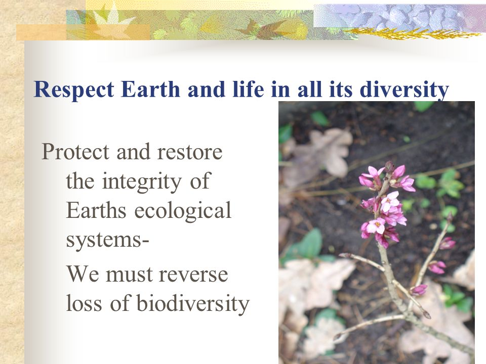 Respect Earth and life in all its diversity Protect and restore the integrity of Earths ecological systems- We must reverse loss of biodiversity