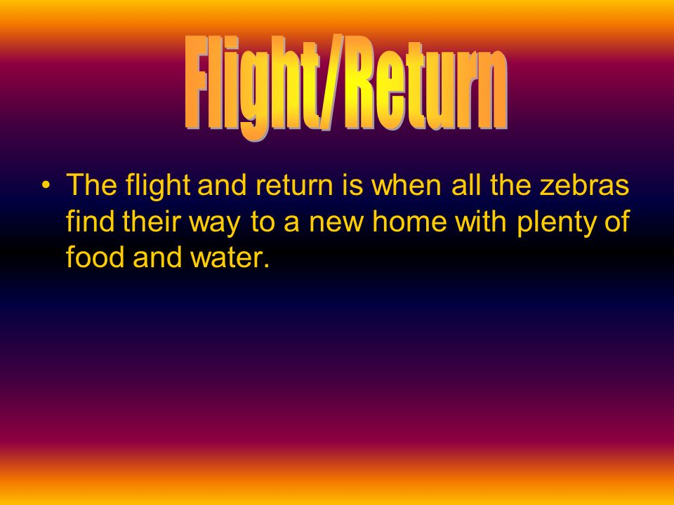The flight and return is when all the zebras find their way to a new home with plenty of food and water.