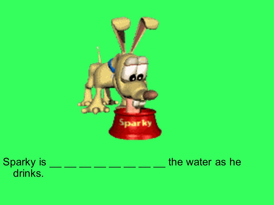 Sparky is __ __ __ __ __ __ __ __ the water as he drinks.