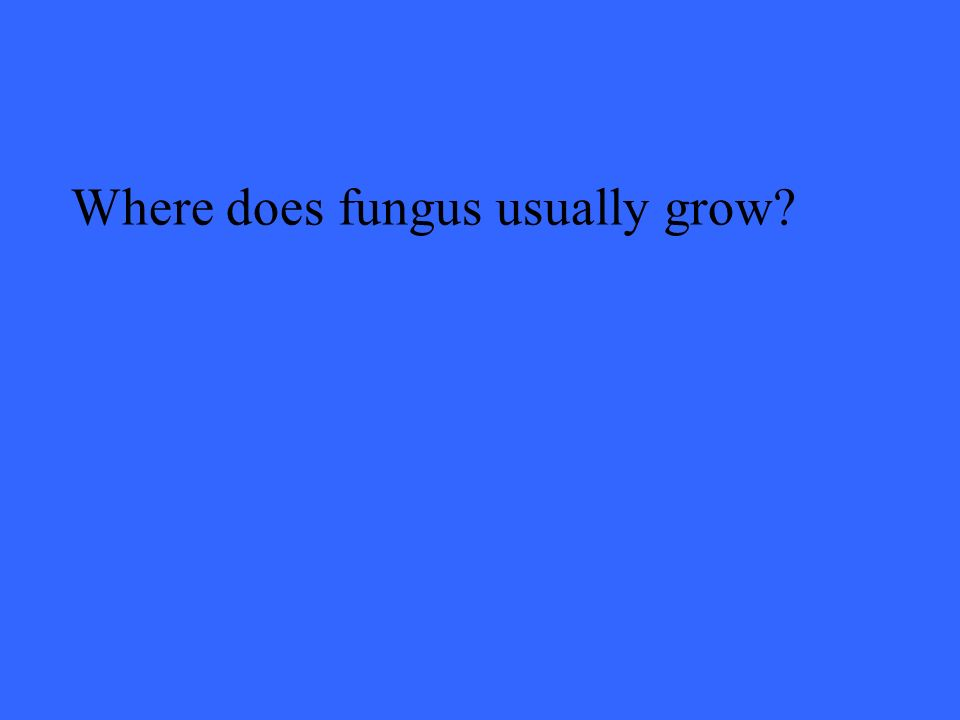 Where does fungus usually grow
