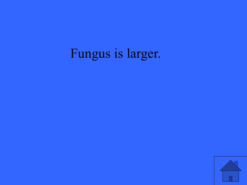 Fungus is larger.