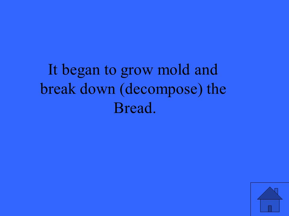 It began to grow mold and break down (decompose) the Bread.