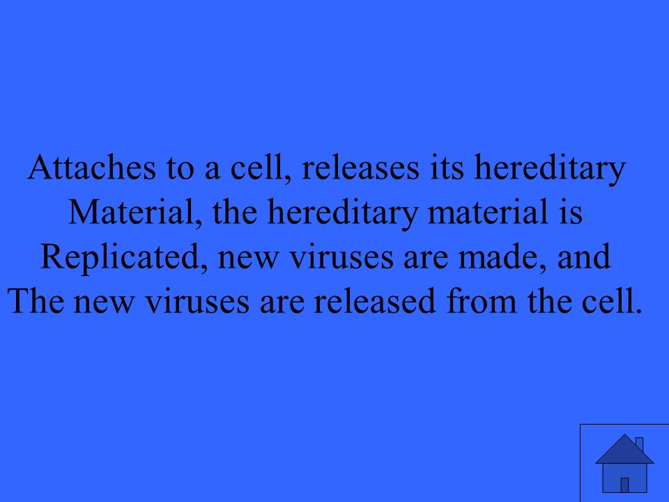 Attaches to a cell, releases its hereditary Material, the hereditary material is Replicated, new viruses are made, and The new viruses are released from the cell.