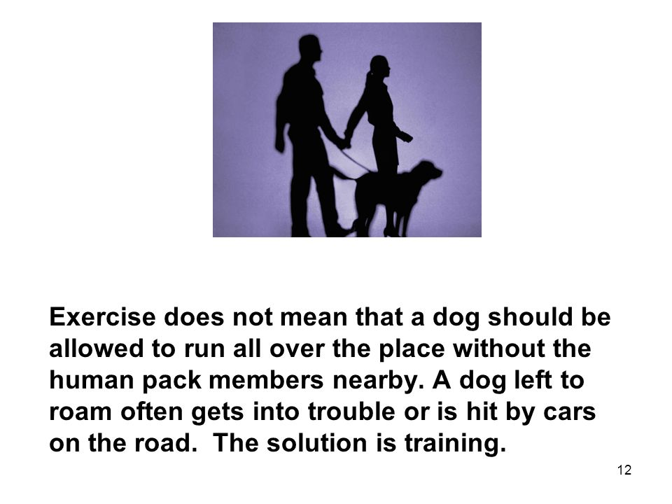 12 Exercise does not mean that a dog should be allowed to run all over the place without the human pack members nearby.