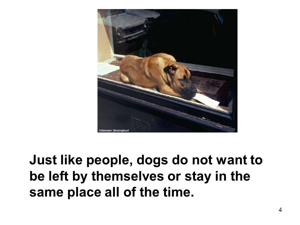 4 Just like people, dogs do not want to be left by themselves or stay in the same place all of the time.