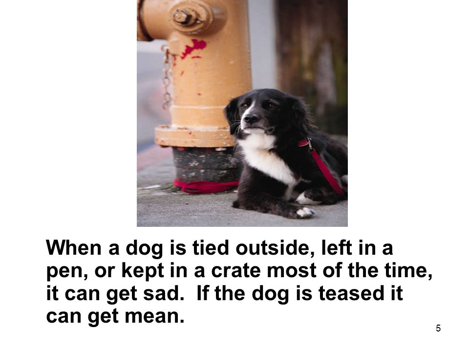 5 When a dog is tied outside, left in a pen, or kept in a crate most of the time, it can get sad.