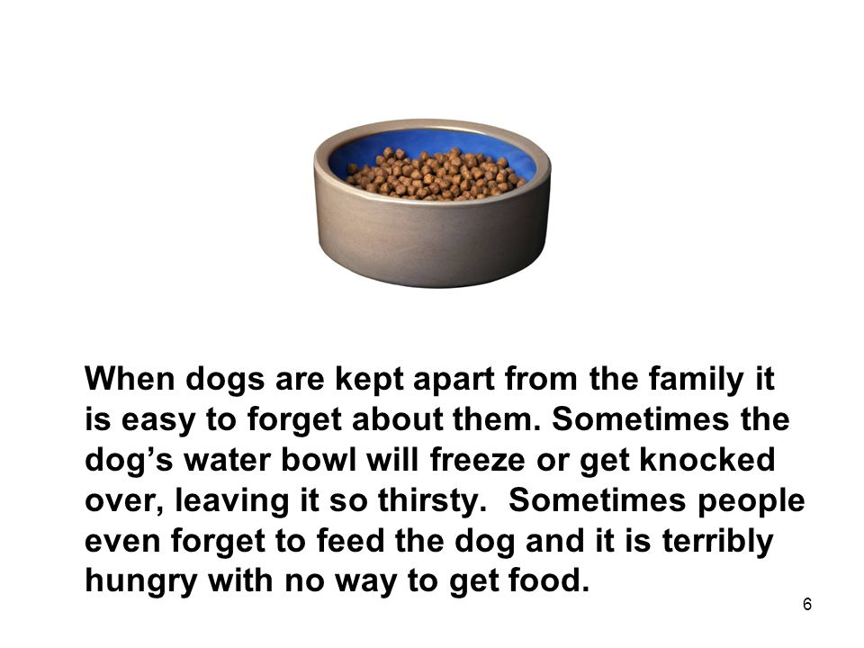 6 When dogs are kept apart from the family it is easy to forget about them.