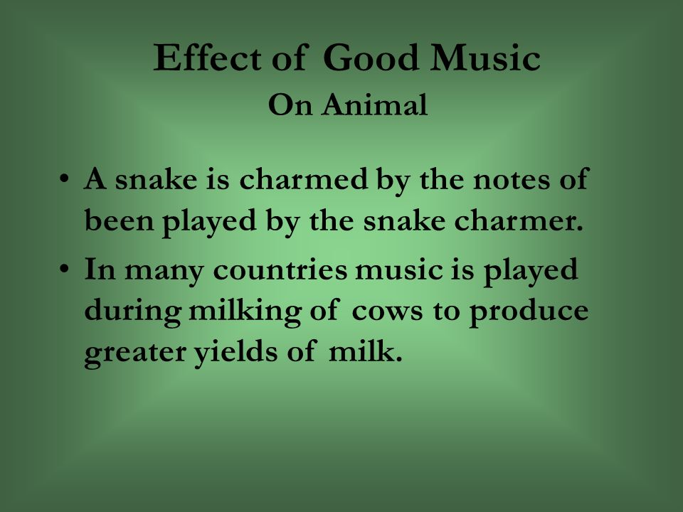 Effect of Good Music On Animal A snake is charmed by the notes of been played by the snake charmer.