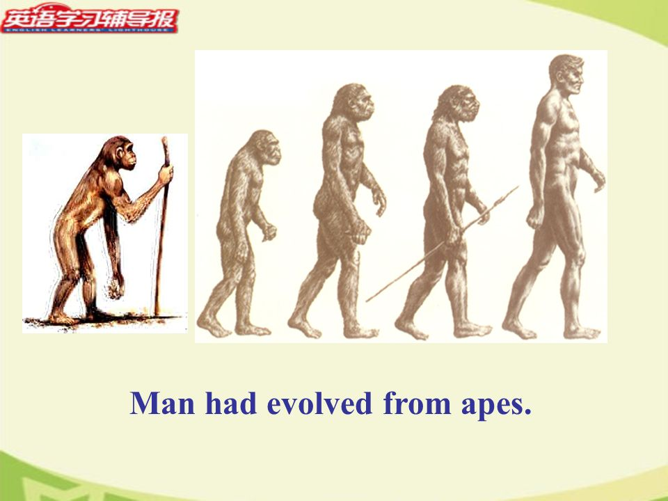 Man had evolved from apes.