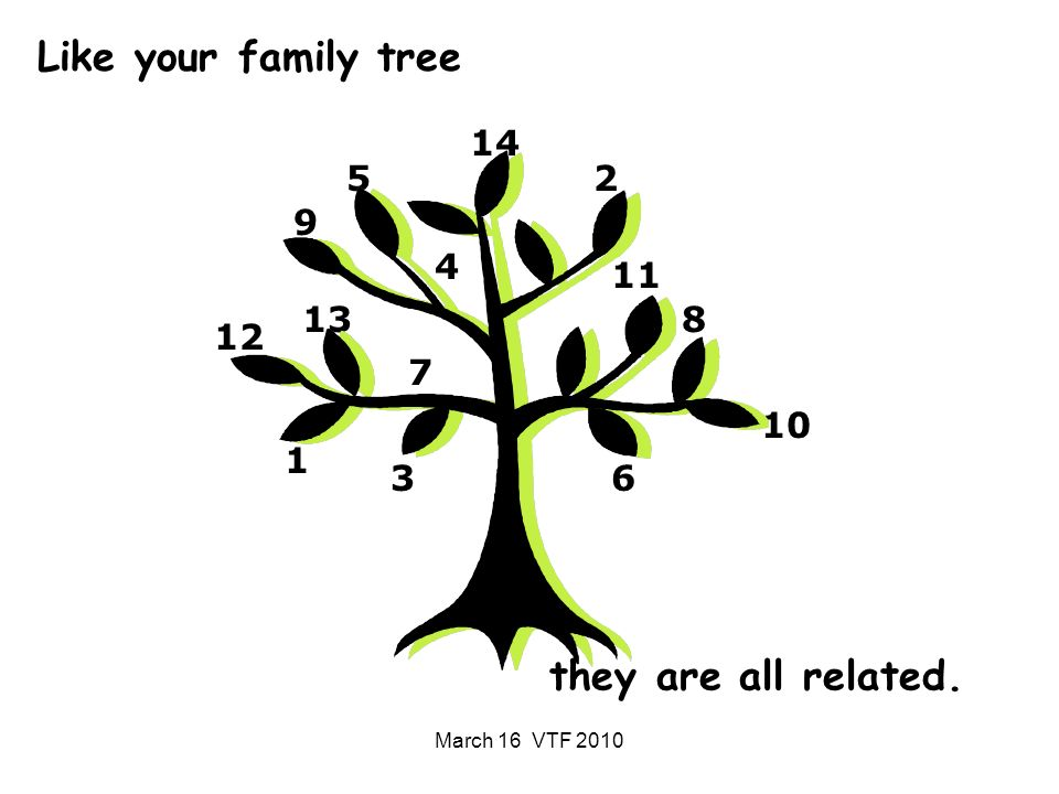 March 16 VTF 2010 1 6 9 5 8 7 2 4 3 12 10 11 13 Like your family tree 14 they are all related.