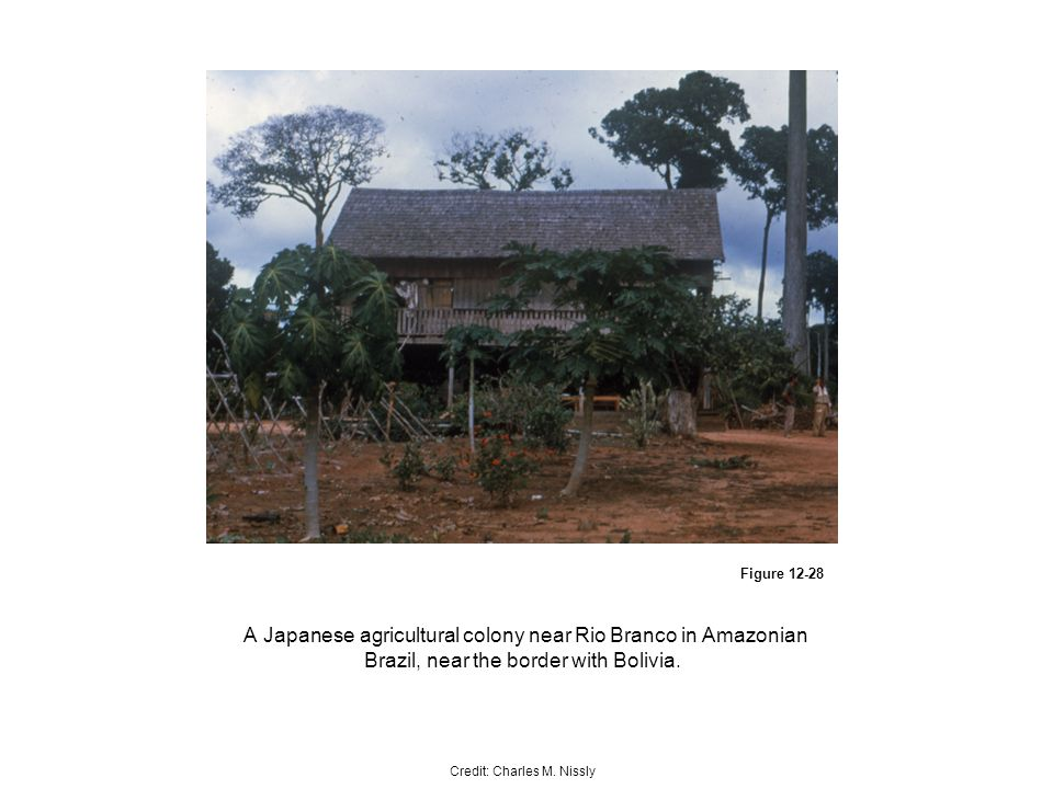 Figure A Japanese agricultural colony near Rio Branco in Amazonian Brazil, near the border with Bolivia.