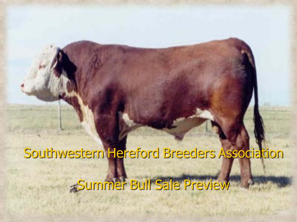Southwestern Hereford Breeders Association Summer Bull Sale Preview