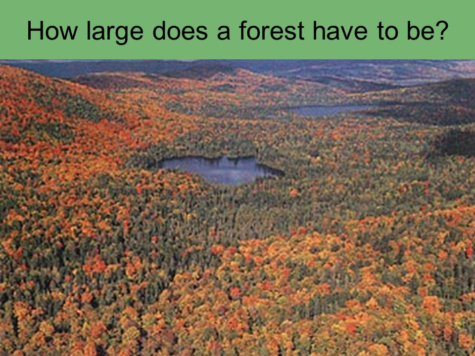 How large does a forest have to be