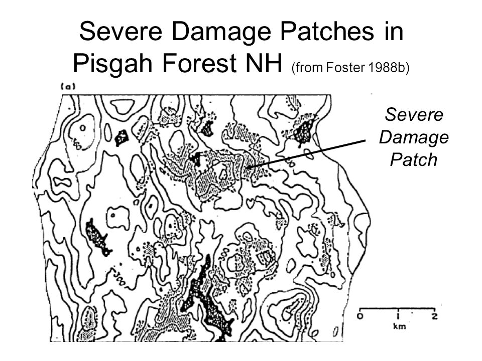 Severe Damage Patches in Pisgah Forest NH (from Foster 1988b) Severe Damage Patch