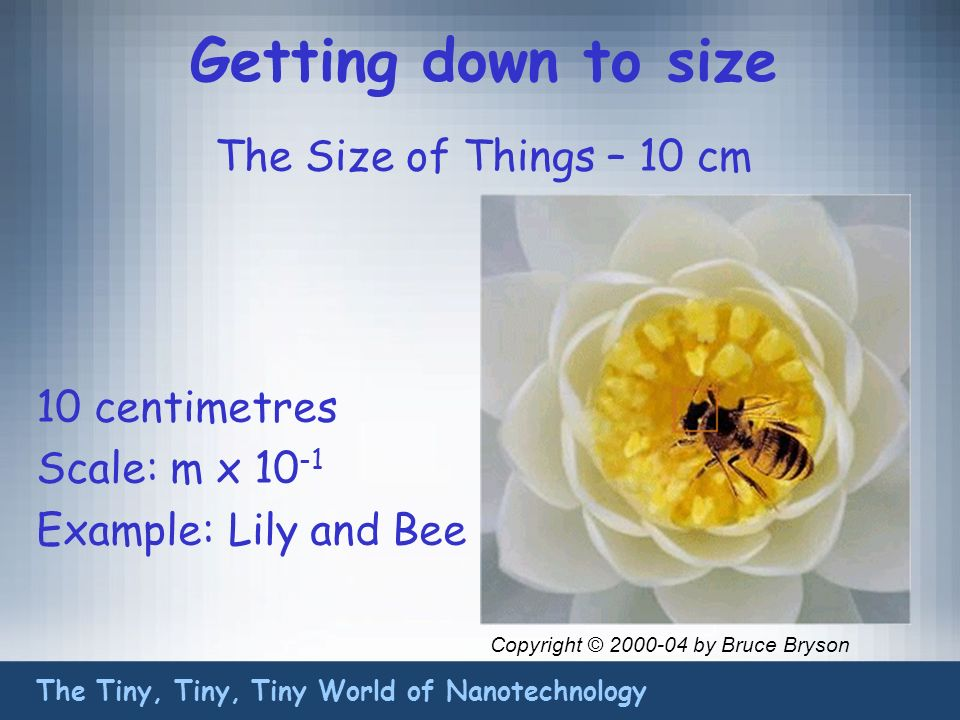 Getting down to size The Size of Things – 10 cm The Tiny, Tiny, Tiny World of Nanotechnology 10 centimetres Scale: m x 10 -1 Example:Lily and Bee Copyright © 2000-04 by Bruce Bryson