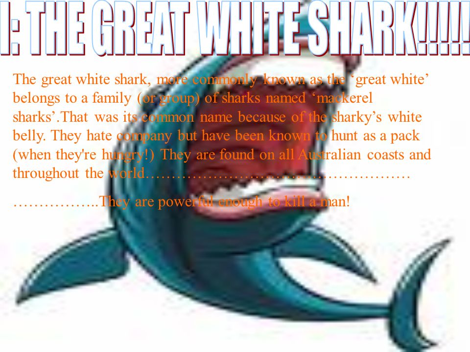 The great white shark, more commonly known as the great white belongs to a family (or group) of sharks named mackerel sharks.That was its common name because of the sharkys white belly.