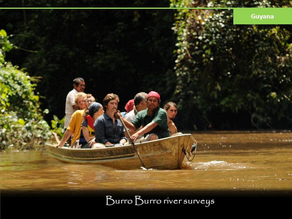 Burro Burro river surveys Guyana