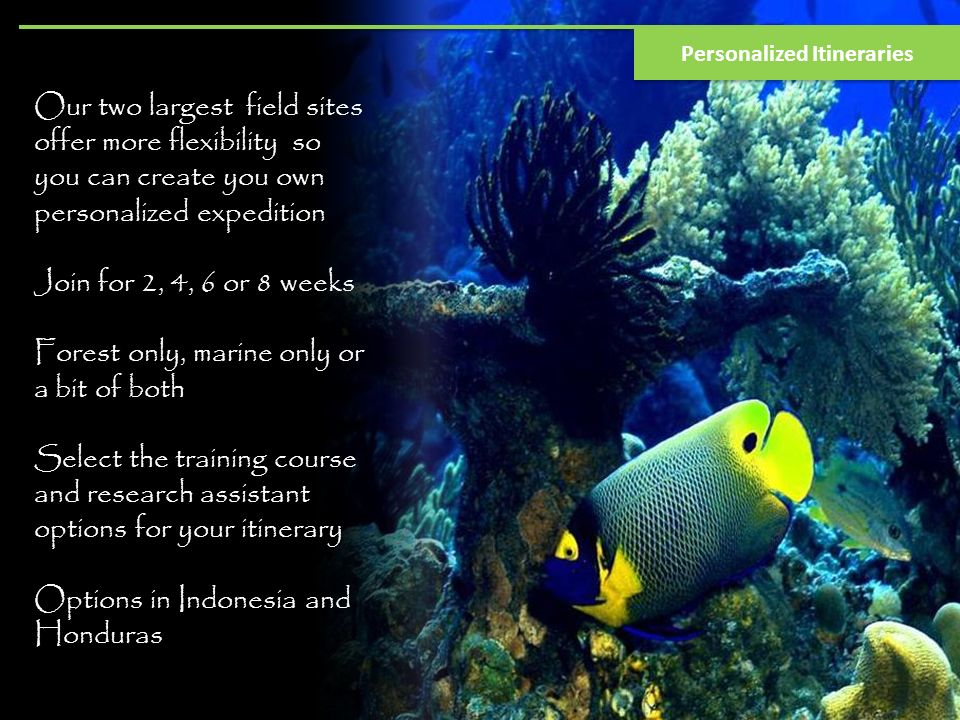 Our two largest field sites offer more flexibility so you can create you own personalized expedition Join for 2, 4, 6 or 8 weeks Forest only, marine only or a bit of both Select the training course and research assistant options for your itinerary Options in Indonesia and Honduras Personalized Itineraries