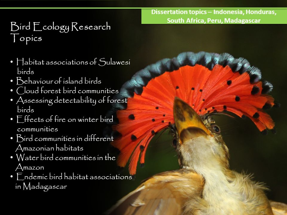 Bird Ecology Research Topics Habitat associations of Sulawesi birds Behaviour of island birds Cloud forest bird communities Assessing detectability of forest birds Effects of fire on winter bird communities Bird communities in different Amazonian habitats Water bird communities in the Amazon Endemic bird habitat associations in Madagascar Dissertation topics – Indonesia, Honduras, South Africa, Peru, Madagascar
