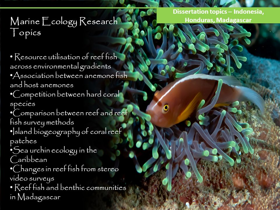 Marine Ecology Research Topics Resource utilisation of reef fish across environmental gradients Association between anemone fish and host anemones Competition between hard coral species Comparison between reef and reef fish survey methods Island biogeography of coral reef patches Sea urchin ecology in the Caribbean Changes in reef fish from stereo video surveys Reef fish and benthic communities in Madagascar Dissertation topics – Indonesia, Honduras, Madagascar