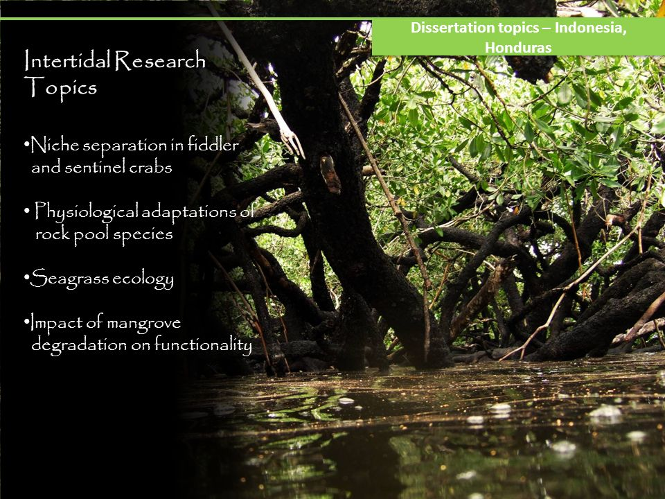 Intertidal Research Topics Niche separation in fiddler and sentinel crabs Physiological adaptations of rock pool species Seagrass ecology Impact of mangrove degradation on functionality Dissertation topics – Indonesia, Honduras