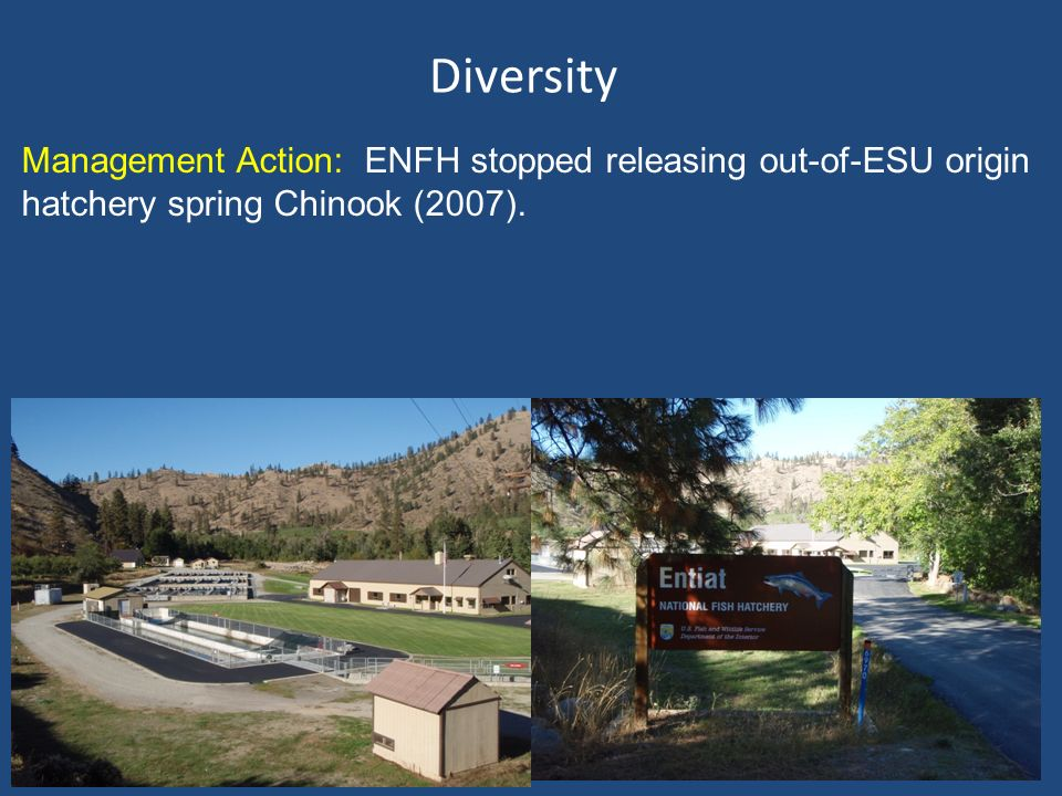 Diversity Management Action: ENFH stopped releasing out-of-ESU origin hatchery spring Chinook (2007).