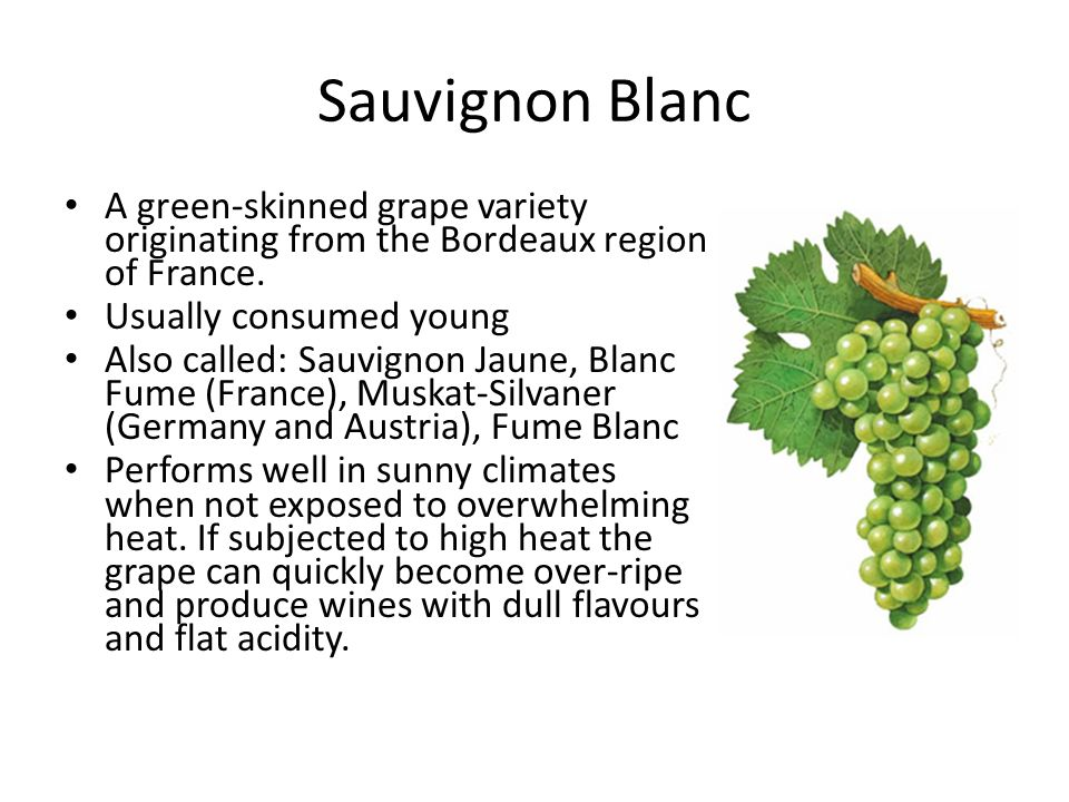 Sauvignon Blanc A green-skinned grape variety originating from the Bordeaux region of France.