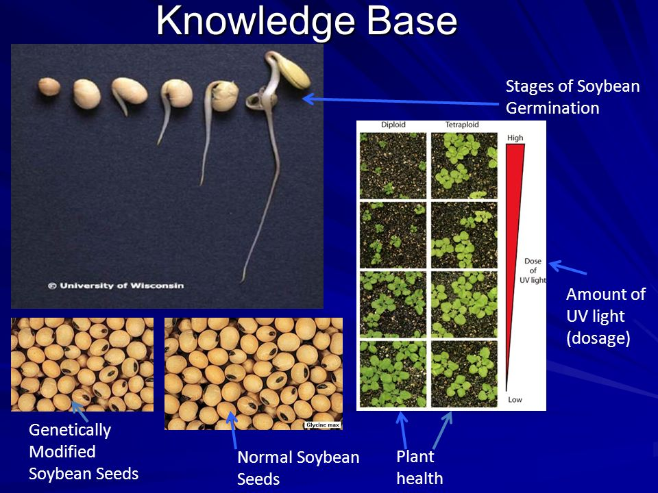 Knowledge Base Stages of Soybean Germination Plant health Amount of UV light (dosage) Genetically Modified Soybean Seeds Normal Soybean Seeds