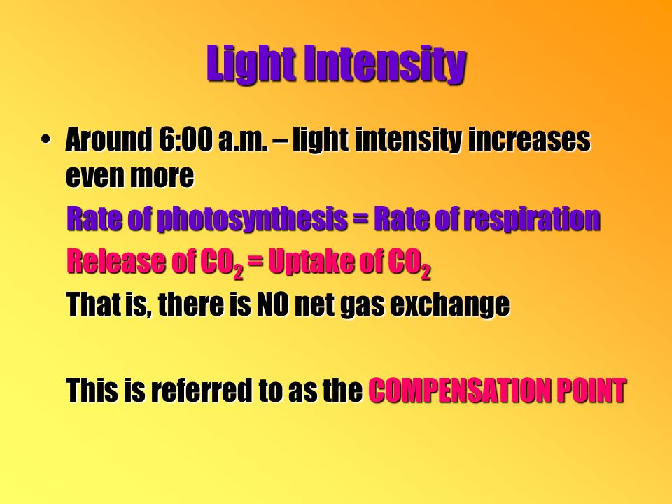Around 6:00 a.m. – light intensity increases even moreAround 6:00 a.m.