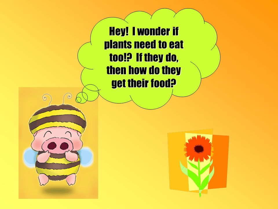 Hey! I wonder if plants need to eat too! If they do, then how do they get their food