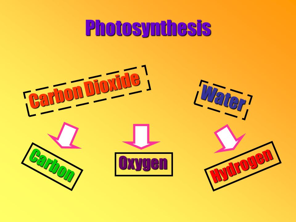 Photosynthesis Carbon Dioxide Water Carbon Oxygen Hydrogen
