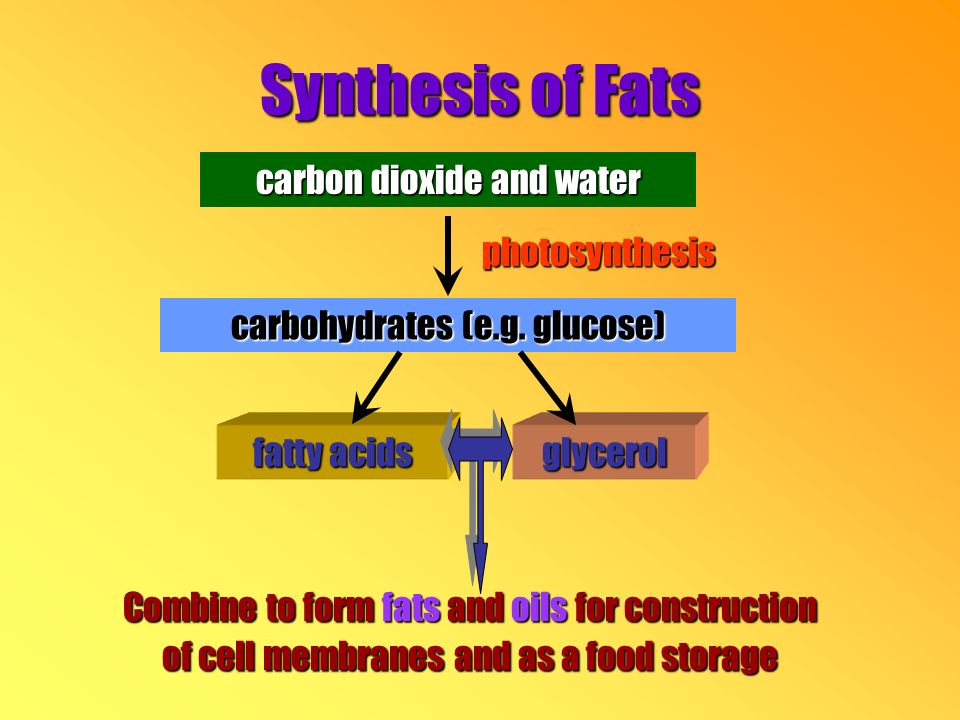 carbon dioxide and water photosynthesis carbohydrates (e.g.