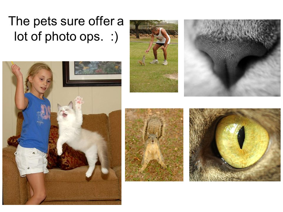 The pets sure offer a lot of photo ops. :)