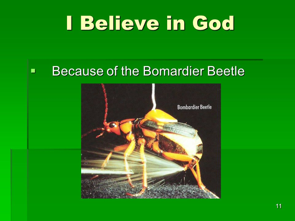 I Believe in God Because of the Bomardier Beetle Because of the Bomardier Beetle 11