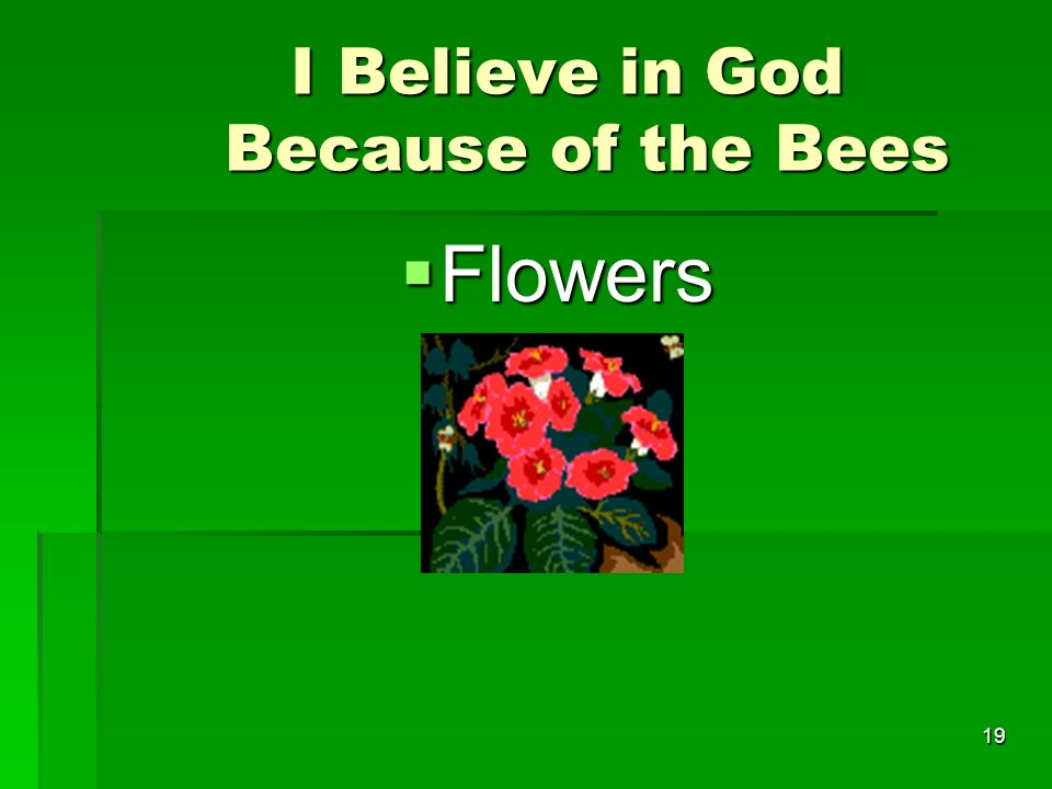I Believe in God Because of the Bees I Believe in God Because of the Bees Flowers Flowers 19