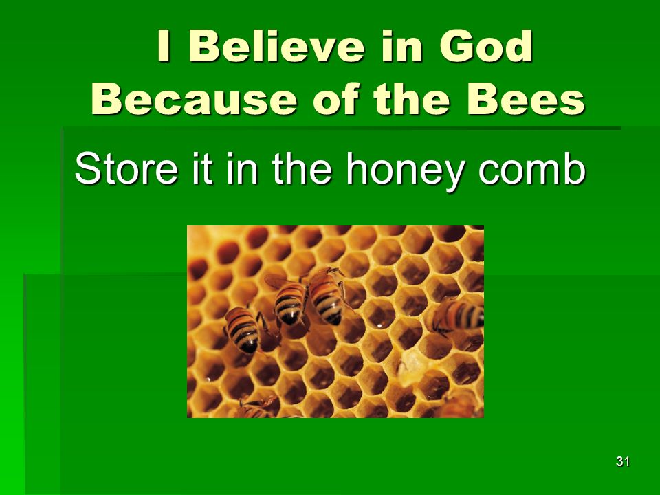 I Believe in God Because of the Bees I Believe in God Because of the Bees Store it in the honey comb 31