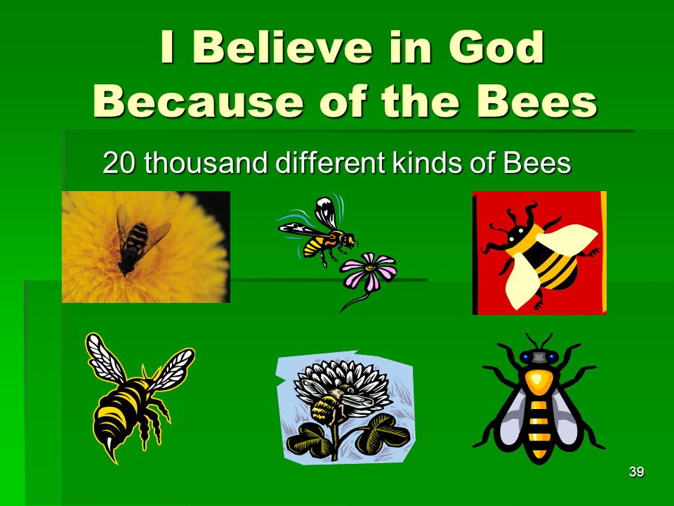 I Believe in God Because of the Bees I Believe in God Because of the Bees 20 thousand different kinds of Bees 39