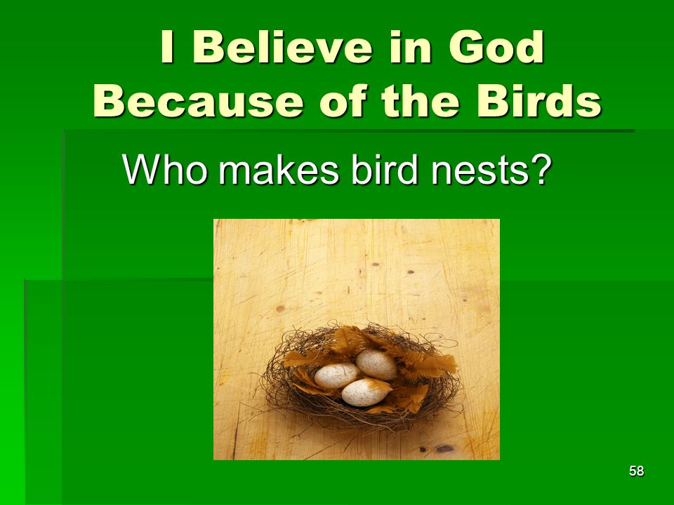 I Believe in God Because of the Birds I Believe in God Because of the Birds Who makes bird nests.