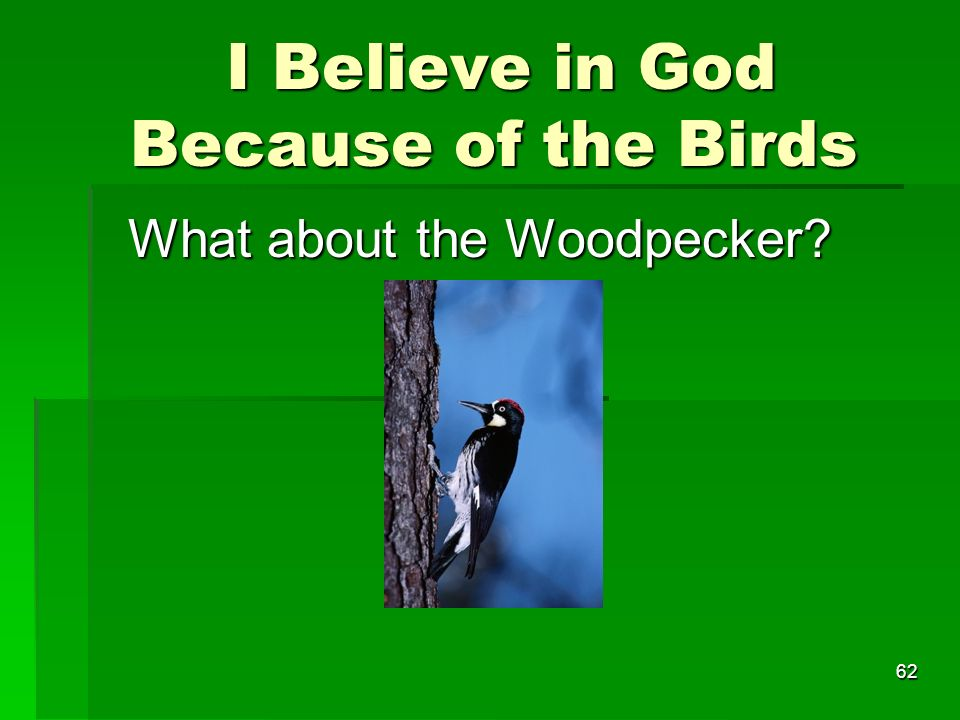 I Believe in God Because of the Birds I Believe in God Because of the Birds What about the Woodpecker.