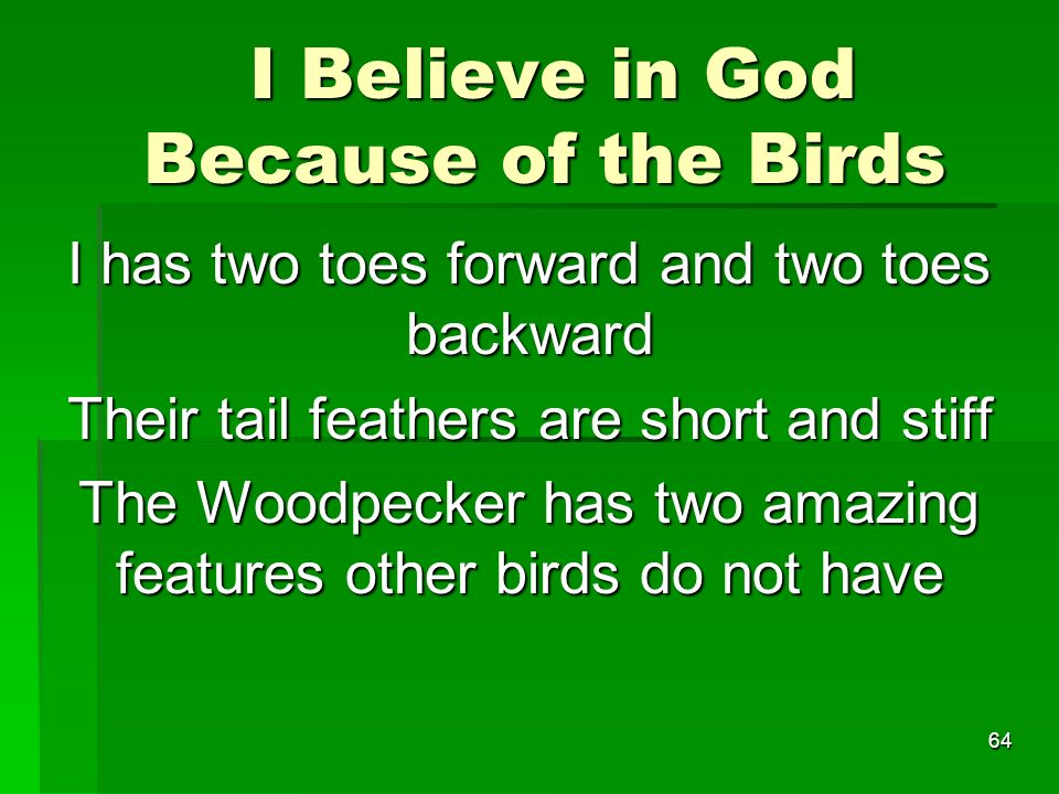 I Believe in God Because of the Birds I Believe in God Because of the Birds I has two toes forward and two toes backward Their tail feathers are short and stiff The Woodpecker has two amazing features other birds do not have 64