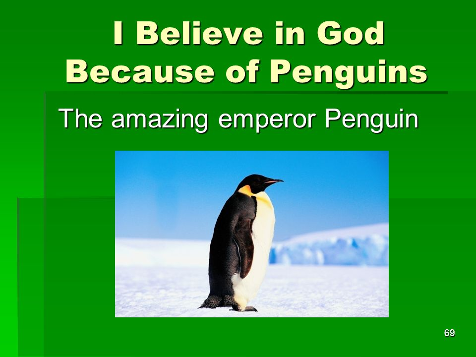 I Believe in God Because of Penguins I Believe in God Because of Penguins The amazing emperor Penguin 69