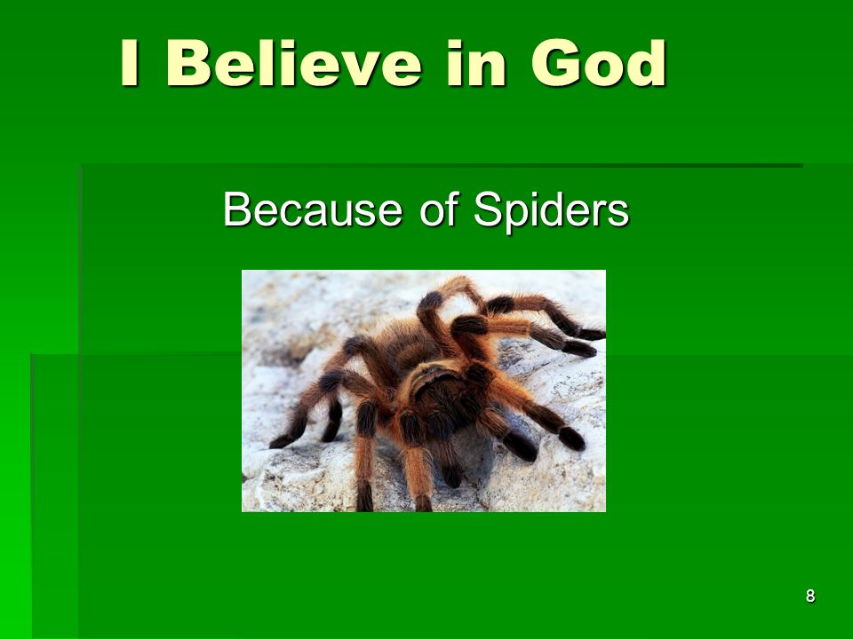 I Believe in God I Believe in God Because of Spiders 8