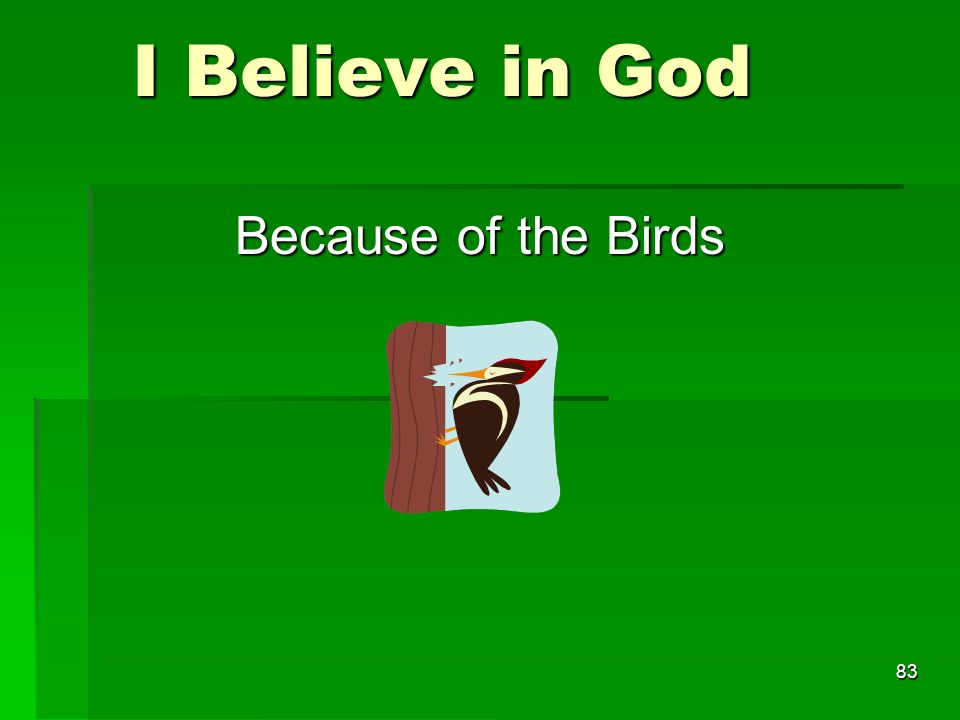 I Believe in God I Believe in God Because of the Birds 83