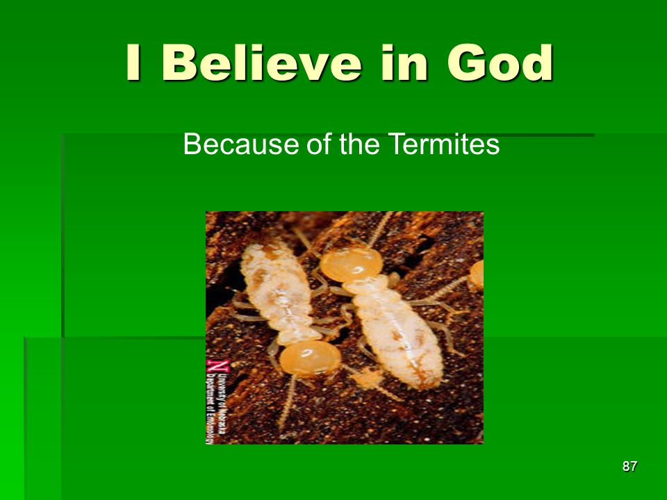 I Believe in God 87 Because of the Termites
