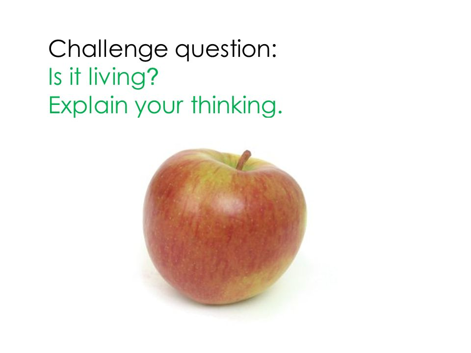 Challenge question: Is it living Explain your thinking.