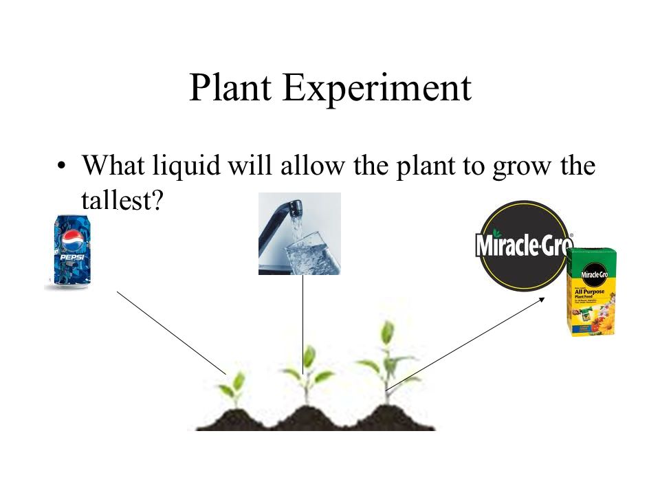 Plant Experiment What liquid will allow the plant to grow the tallest