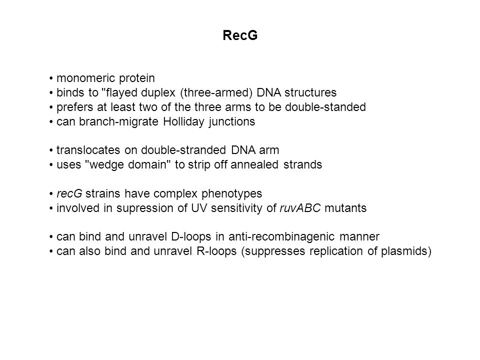 RecG monomeric protein binds to flayed duplex (three-armed) DNA structures prefers at least two of the three arms to be double-standed can branch-migrate Holliday junctions translocates on double-stranded DNA arm uses wedge domain to strip off annealed strands recG strains have complex phenotypes involved in supression of UV sensitivity of ruvABC mutants can bind and unravel D-loops in anti-recombinagenic manner can also bind and unravel R-loops (suppresses replication of plasmids)